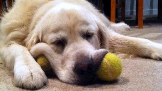 Jasper has won hearts as a leading ball boy. His matches are best watched in time-lapse.