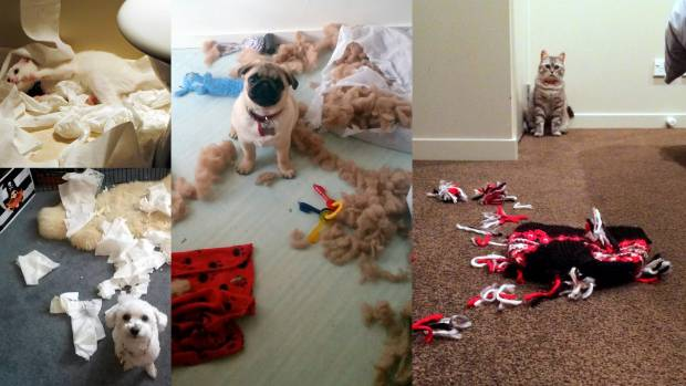 In the proud sport known as Tearing Things Up, all species can compete, Here are highlights from Hollie, Jack Smith, ...