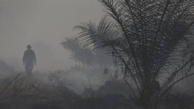 In South-east Asia rainforest destruction to make way for palm plantations is a burning issue, especially when ...