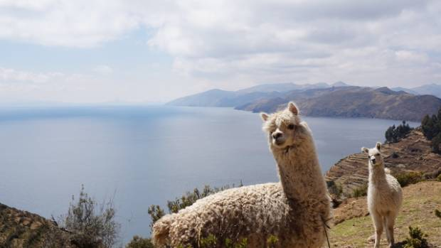 Lake Titicaca on the boarder of Bolivia and Peru is the world's highest lake.