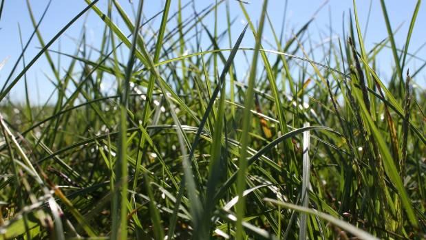 Ryegrass not always the best option, says rural consultant Graham Butcher.