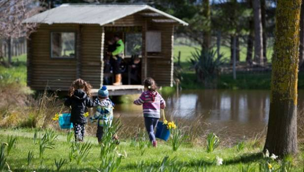 Visiting Taniwha to pick daffodils is a popular spring outing for children.
