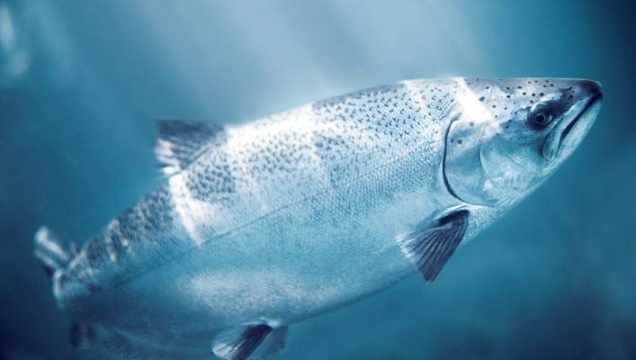 New Zealand King Salmon IPO share price confirmed at $1 12