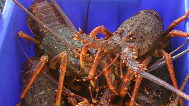 Researchers says management of the CRA2 fishery needs to change.