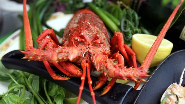 """Fresh caught crayfish dinner could be a thing of the past as crayfish are declared  """"functionally extinct"""" in the ..."""