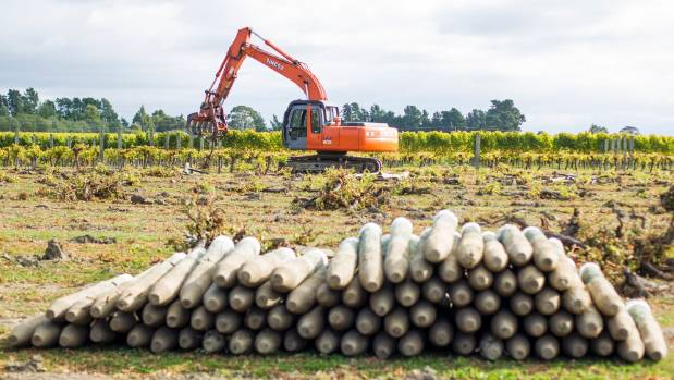 Vineyard posts being removed to make way for a housing development.