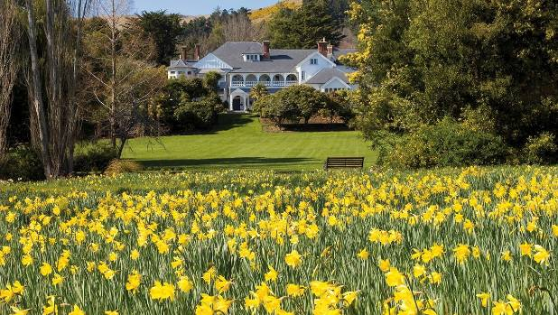 Otahuna Lodge at Tai Tapu  with its famous daffodils in full bloom.