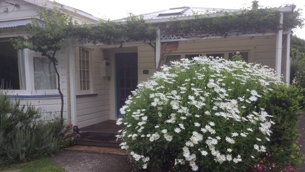 Expert advice on how to grow marguerite daisies in nz for Grow landscapes christchurch