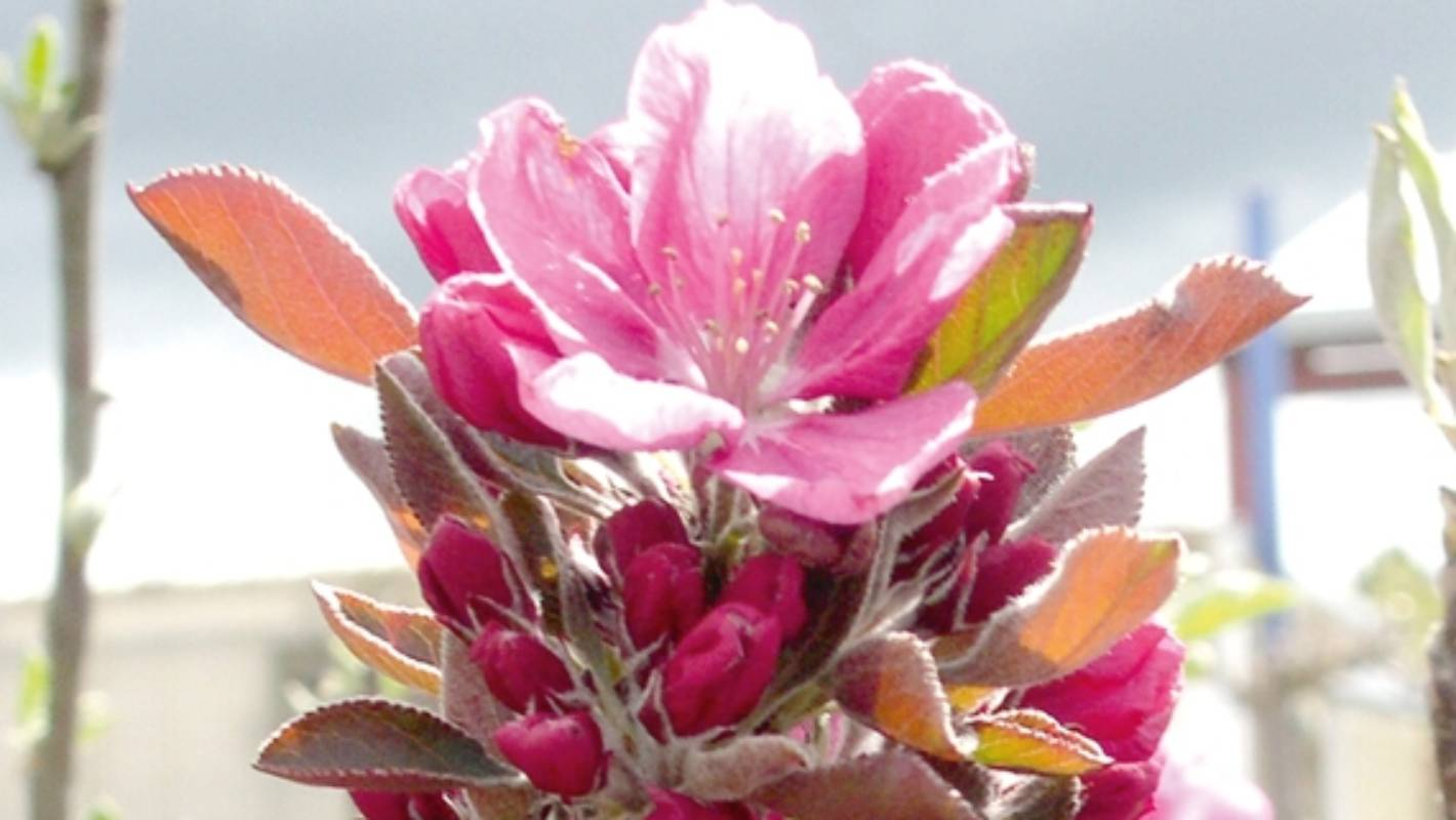 The Best Fruit Trees For Spring Blossom Stuff