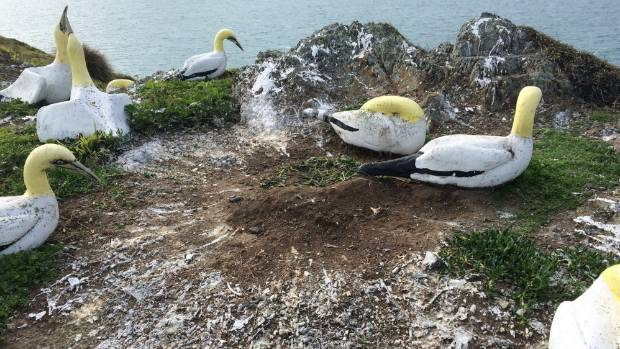 "The concrete gannet colony even has fake ""guano"" made out of paint, in an effort to attract real birds."