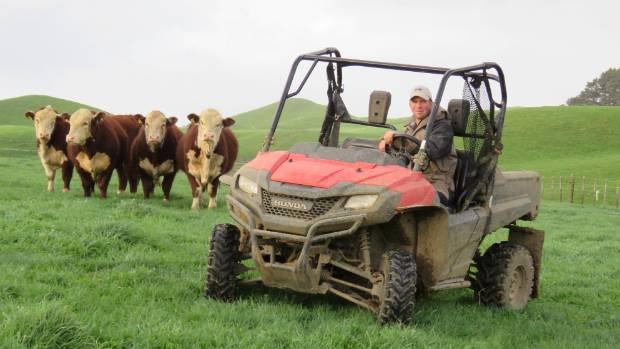 Pip Robinson says yearling bulls will be 30kg heavier than last year at this week's Kokonga Herefords sale at Frankton.