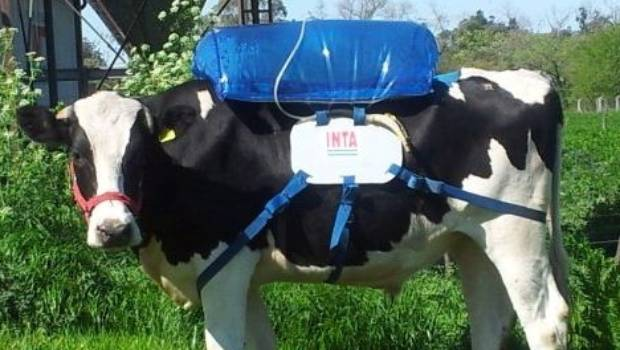 Harnessing a cow's flatulence could help save the planet