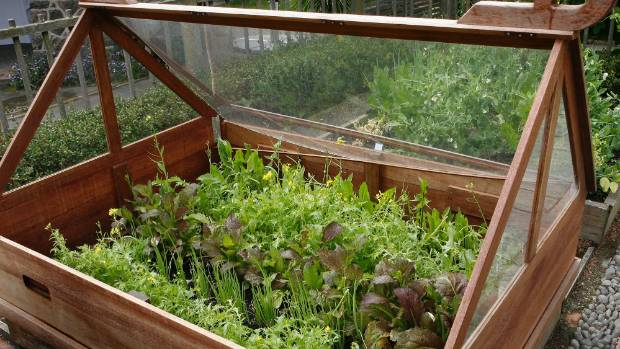 Salad Vegetables In A Mini Greenhouse Christchurch Consider What You Want To