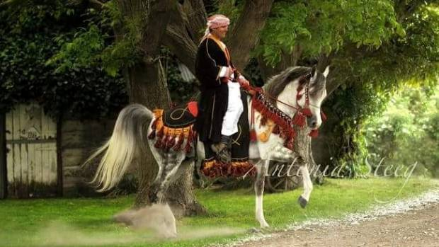 David Marshall and his stallion Zaddam in full arabian regalia.