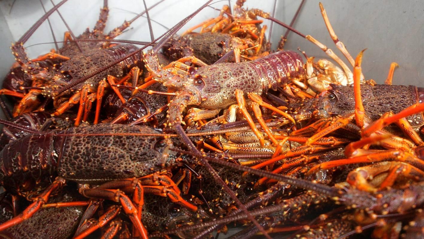 Customary fisheries guardian charged after raids on paua ...
