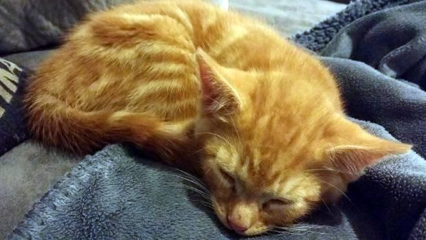 Today's fiery redhead: Oscar.