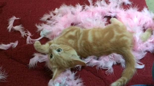 It looks like a murder scene, but Jessie's only victim was a feather duster.
