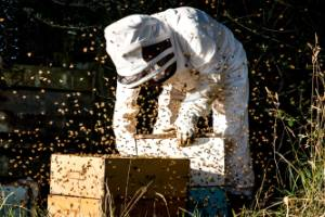 Investing in apiculture could offer Gisborne a sweet economic boost.