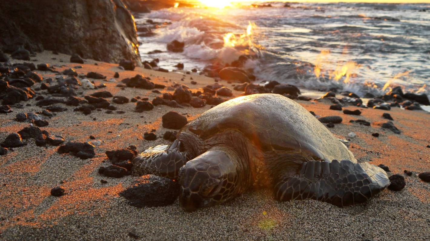 1404aa1655d8f Turtle smuggling kingpin sentenced to over 2 years in prison