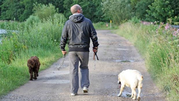 So much the better if you've got some dogs to walk.