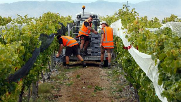 New research will help growers predict their yields more accurately, which will help companies balance their grape ...