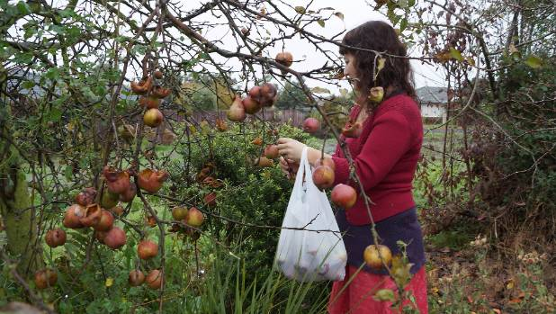 Urban Forager Jo Wildish forages for fruit in Christchurch's residential red zone.