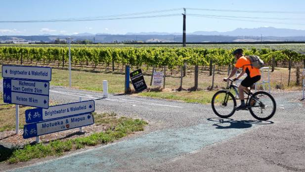 A cyclist bikes along the Tasman Great Taste Trail, past a vineyard near the Appleby overbridge.