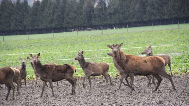 A new deer processing facility will be built in Southland.