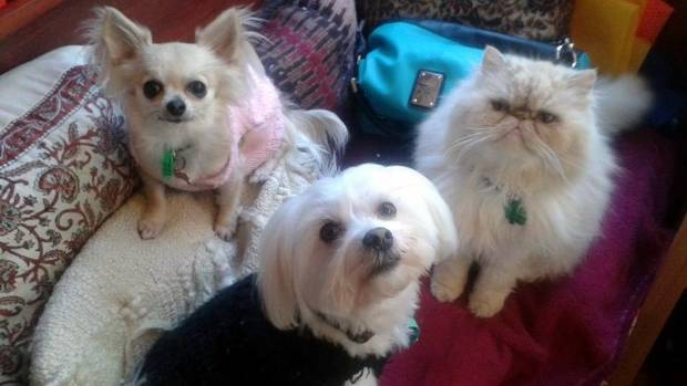 Misnaming: Why Do You Call Your Spouse By Your Pet's Name