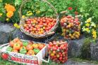 What sorts of tomatoes will you be growing this year?