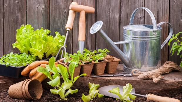 Plant a few lettuce seedlings every week or two so they're not all ready at once.