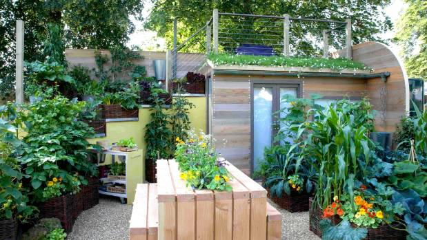 In this tiny garden veges and herbs grow in the table, up the walls and even on the roof.