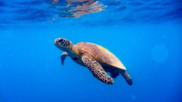The Snorkel with Turtles experience leaves from Fingal Head.