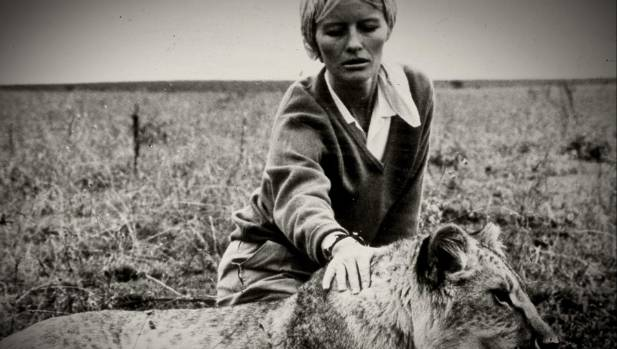 Virginia McKenna on the set of Born Free in the 1960s.