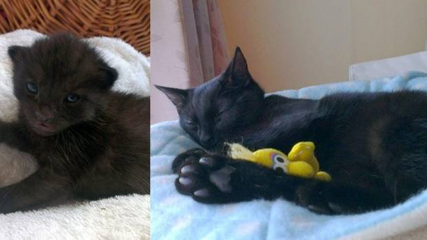Buster as a tiny kitten, and as he is now. A devoted carer has made all the difference.
