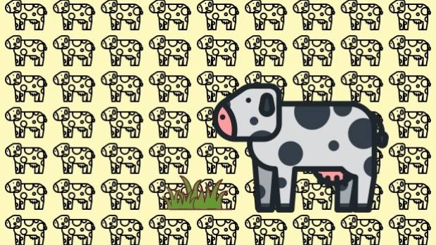 There are around 6.5 million dairy cattle, including 5 million which are milking animals, in New Zealand.