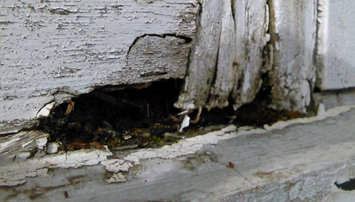 Home A Health Hazard After Flood Of Human Waste Stuff Co Nz