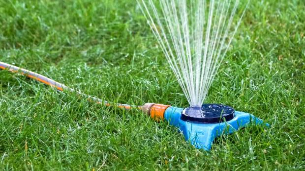 Watering Deeply Once Or Twice A Week Encourages Plants To Send Roots Deep  Searching For Moisture