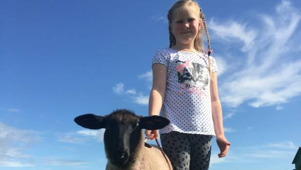 Ella Ensor and her pet lamb Crystal were named the junior champions at the Oropi School Calf Club event before the lamb ...