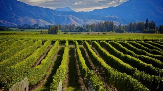 Marlborough is the largest wine growing region in New Zealand, with around 24,000 hectares of vineyards.