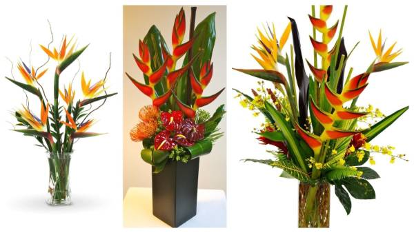 Big arrangements that include blooms of Bird of Paradise, Heliconia, Ginger and Anthurium are a great way to bring ...