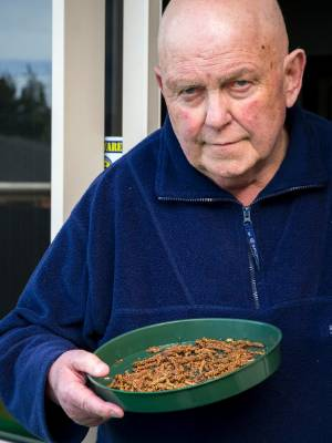 Timaru resident Terry Kennedy is concerned pods from the silver birch trees near his property are making him sick.