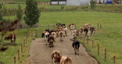 Nationally, New Zealand dairy farmers produced 1.862 billion kilograms of milk solids, worth $8 billion in 2015/16.