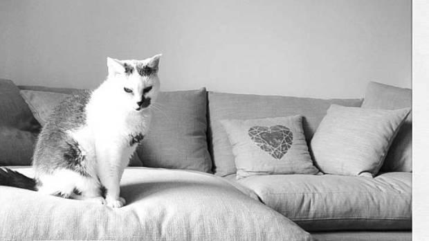 Amanda's cat Gracey relaxes on the Simon James sofa.