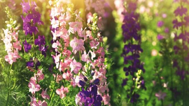 Delicate spikes of larkspur add height to any arrangement.