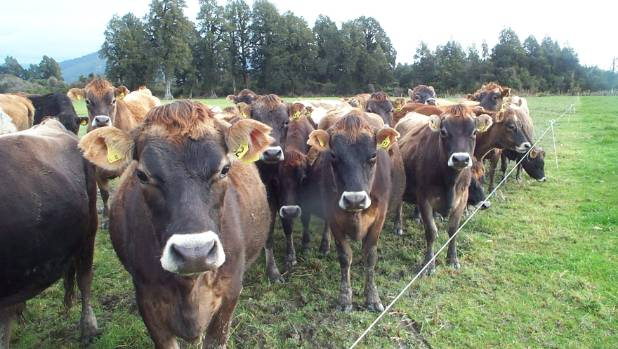 Intensification places unnecessary stress on animals and farmers, says  Frank van Steensel.