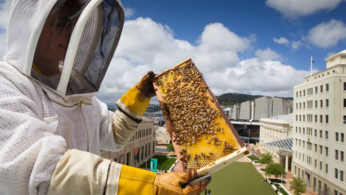 Can You Keep Bees in the City and Keep Your Neighbors Happy?