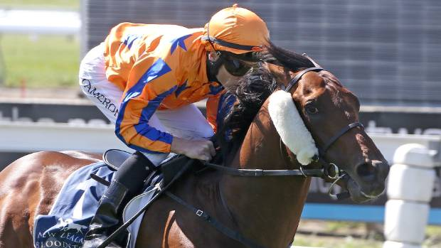 Matt Cameron has a chance to win a second 2000 Guineas in as many years when he rides Hall Of Fame at Riccarton on Saturday.