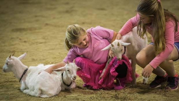 Maggie Trembath, 6 and Lexi Trembath, 10, pat the goats at Manfeild.