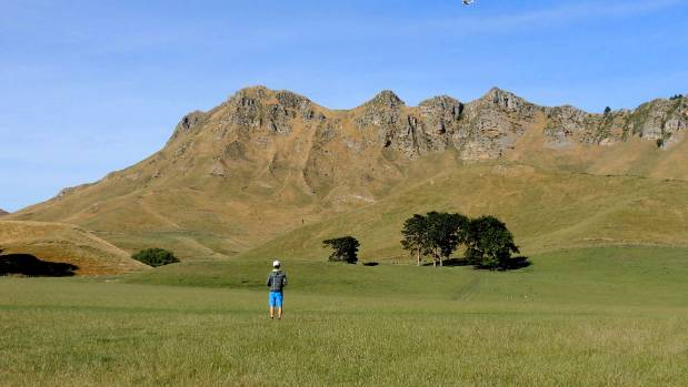 Council to review decision that saw Te Mata Peak 'butchered'